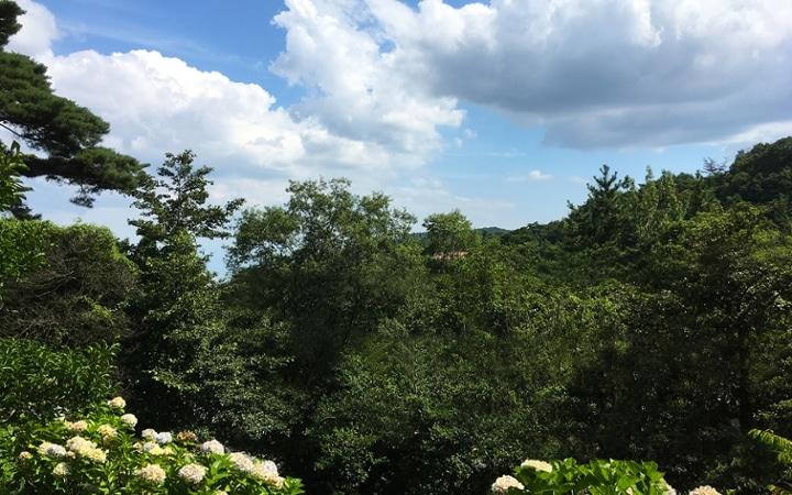 No.107 グレーとグリーンの対比が美しい 山リゾートのセカンドハウス:画像9