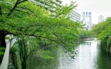No.125 目黒川沿いのグリーンと調和するマンション3LDKのインテリアコーディネート:画像2