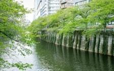 No.125 目黒川沿いのグリーンと調和するマンション3LDKのインテリアコーディネート:画像15